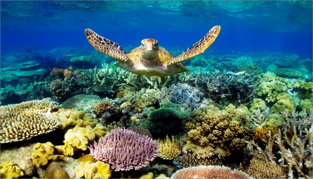 The Great Barrier Reef is labeled as one of the seven wonders of the natural world